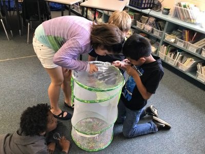 Third grade students investigate butterflies